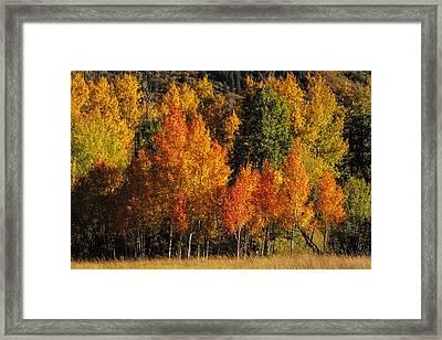 Autumn Brillance Framed Print