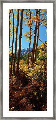 Autumn Brilliance 2 Framed Print by Jeremy Rhoades