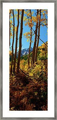 Autumn Brilliance 2 Framed Print