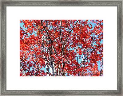 Autumn Brilliance V Framed Print by Suzanne Gaff