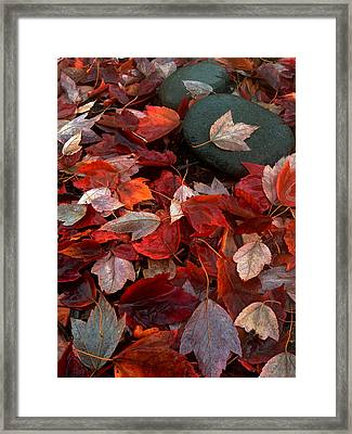 Framed Print featuring the photograph Autumn Broadcast by Gwyn Newcombe