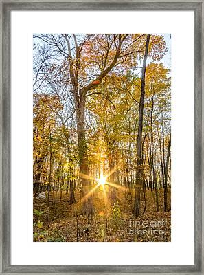 Autumn Burst Framed Print by Andrew Slater