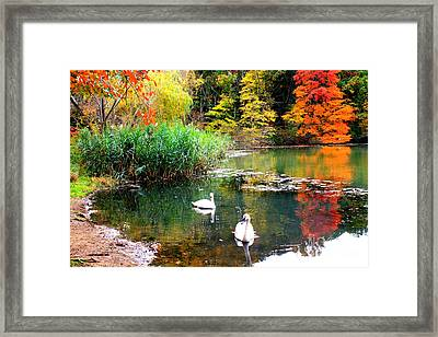 Autumn By The Swan Lake Framed Print by Dora Sofia Caputo Photographic Art and Design