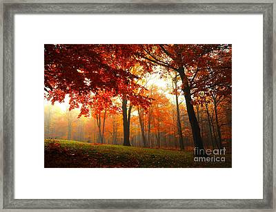 Autumn Canopy Framed Print by Terri Gostola