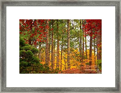 Autumn Canvas Framed Print