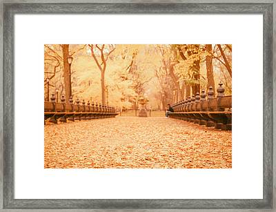 Autumn - Central Park Elm Trees - New York City Framed Print