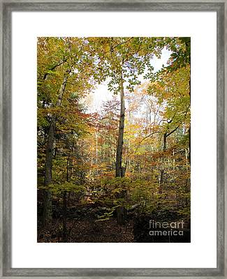 Autumn Clearing Framed Print by Linda Marcille