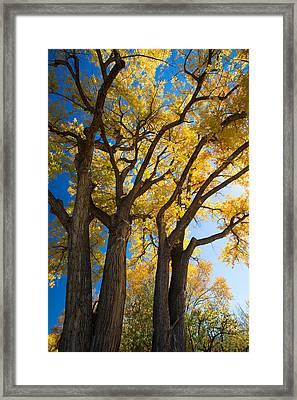 Autumn Color Framed Print by Allen Lefever