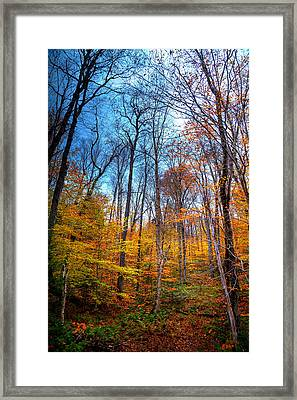Autumn Color Along Green Bridge Road Framed Print by David Patterson