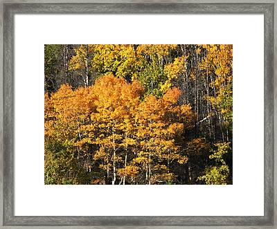 Autumn Color At The Continental Divide Framed Print by Kae Cheatham