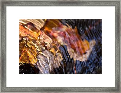 Autumn Color Beneath The Surface Framed Print