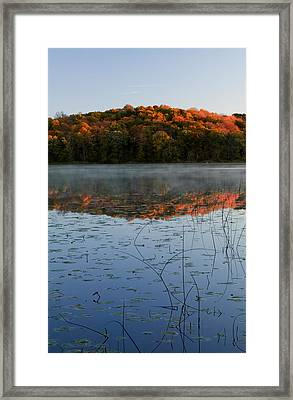 Autumn Color Forest Reflected In Grass Framed Print