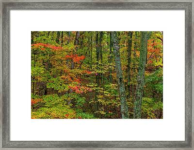 Autumn Color In Brown County State Framed Print by Chuck Haney