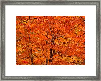 Autumn Color Splash Framed Print