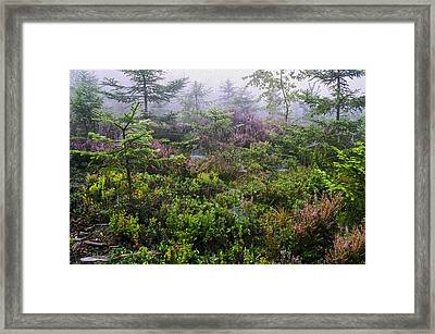 Autumn Colors Framed Print by Aged Pixel