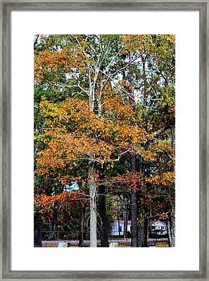 Autumn Colors Framed Print by Carolyn Ricks