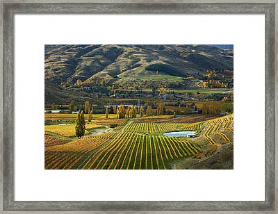 Autumn Colors, Felton Road Vineyard Framed Print