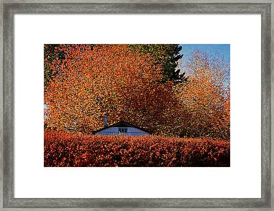Autumn Colors Framed Print by Maria Angelica Maira