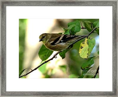 Autumn Colors Framed Print by Marilyn Smith