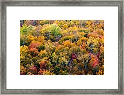 Autumn Colors Framed Print by Matt Dobson