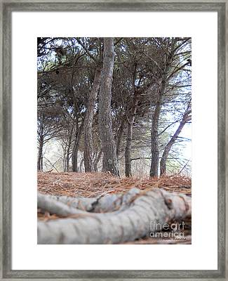 Autumn Colors Framed Print by Ramona Matei