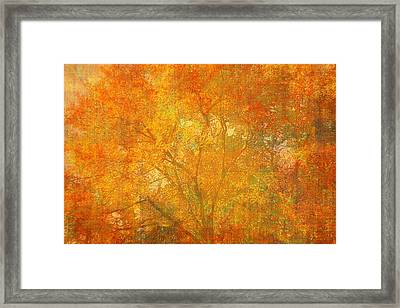 Autumn Colors Framed Print by Suzanne Powers