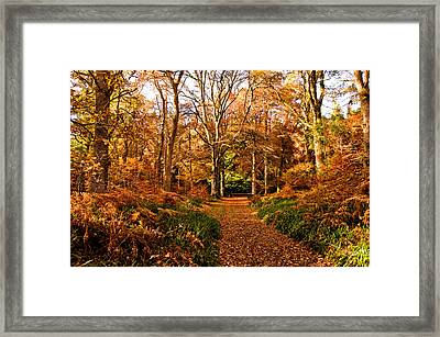 Autumn Colour Framed Print by Jacqi Elmslie