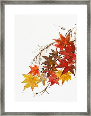 Autumn Colour Framed Print
