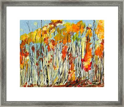 Autumn Colours Framed Print by David Dossett