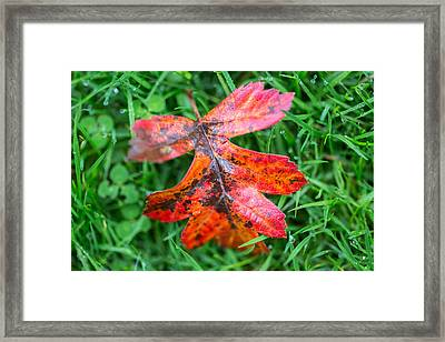Framed Print featuring the photograph Autumn Colours. by Gary Gillette