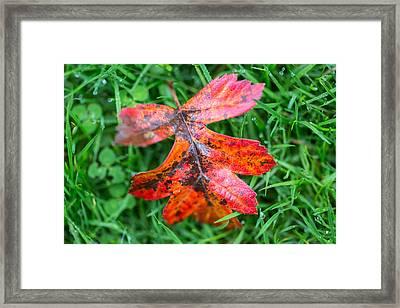 Autumn Colours. Framed Print