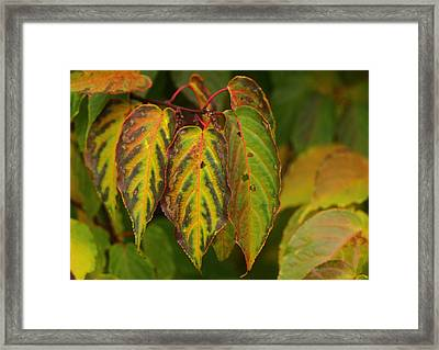 Autumn Colours Framed Print by Jacqui Collett