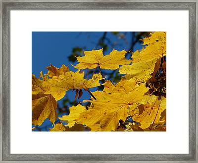 Framed Print featuring the photograph Autumn Colours by Janina  Suuronen