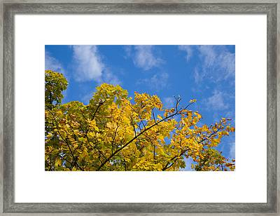 Autumn Colours On An October Morning . Framed Print by Paul Lilley