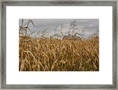 Autumn Corn Field And Barn Framed Print by At Lands End Photography