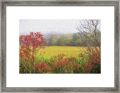 Autumn Cornfield II Framed Print by Tom Singleton