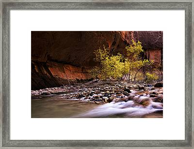 Autumn Cottonwood In The Narrows Framed Print by Andrew Soundarajan