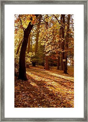 Autumn Country Lane Evening Framed Print by Michele Myers