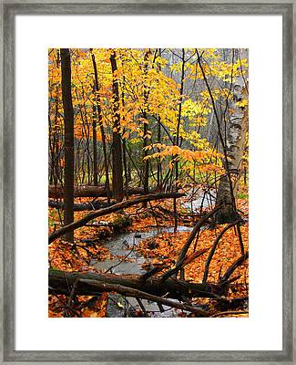 Framed Print featuring the photograph Autumn Creek In The Rain by Rodney Lee Williams