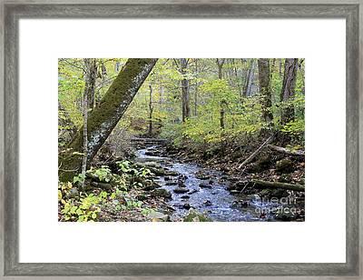 Autumn Creek Framed Print by Jennifer Snelling