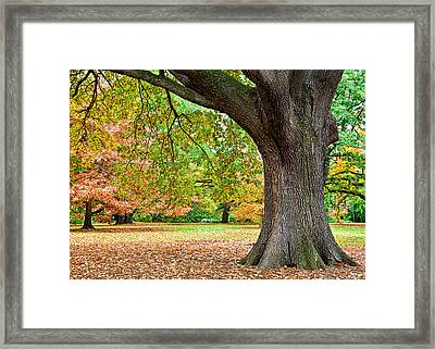 Autumn Framed Print by Dave Bowman