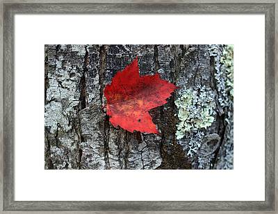 Autumn Day Framed Print