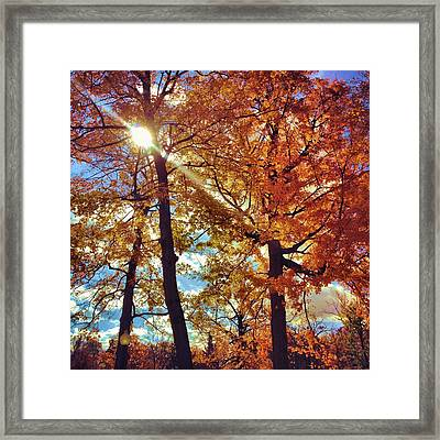 Autumn Days Framed Print
