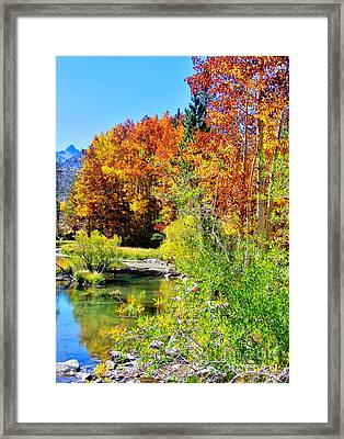 Autumn Days Framed Print by Marilyn Diaz