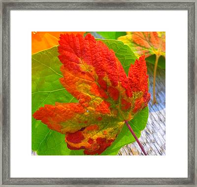 Autumn Delight Framed Print by Karen Horn