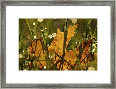 Autumn Dew Framed Print by Penny Meyers