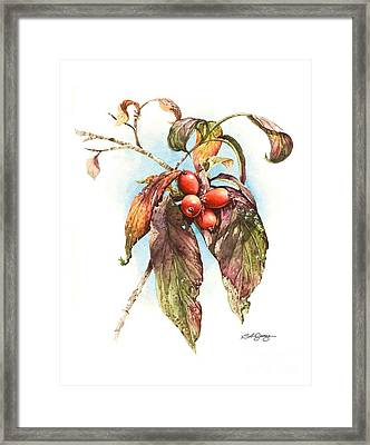 Framed Print featuring the painting Autumn Dogwood by Bob  George