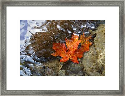 Autumn Down Under Framed Print