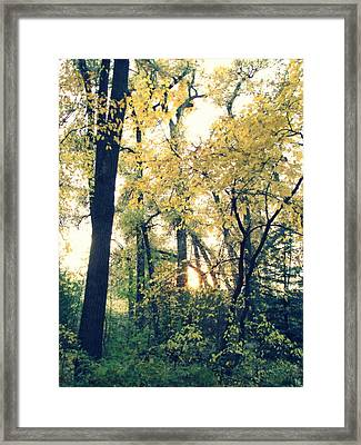 Autumn Evening Framed Print by Jessica Myscofski