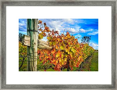 Autumn Falls At The Winery Framed Print by Peta Thames